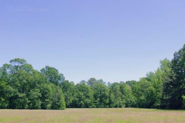 Field Beautiful Day