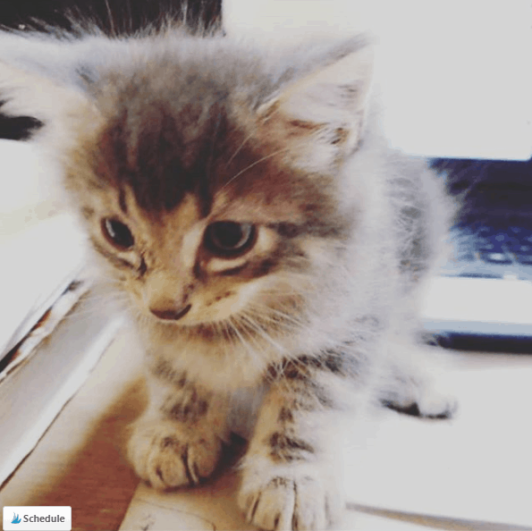 gray kitten on keyboard