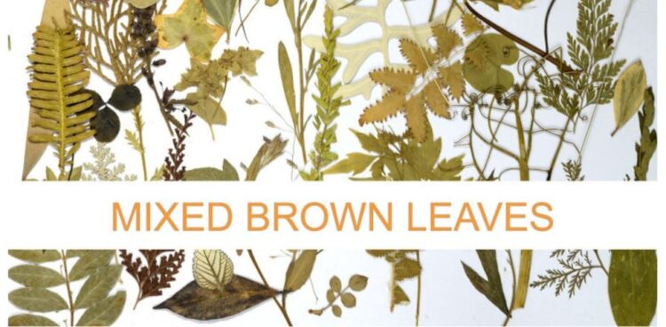 mixed brown leaves pressed